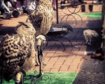 Feria Medieval #sestao – Instagram