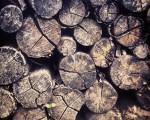Pilaketa #egurra #madera #wood – Instagram