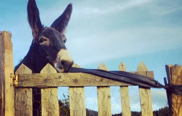 Gure Tomaxa #astoa #burra #Larrabetzu #puerta #atea #madera – Instagram
