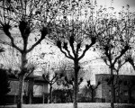 Gorputz biluztuak hodeiak besarkatu nahian #zuhaitz #tree #negua #winter #zerua #sky #ramas – Instagram