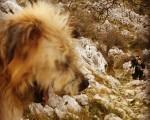 Lagunen zain #Neu #txakur #haitzak #lapiaces #Belatxikieta #Artaun #Dima #12hilabete12mendi #mendizaleak #mountain – Instagram