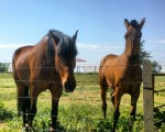 Belleza #caballos #zaldiak #horses #Mamblas #Ávila #primavera #sol #belleza – Instagram