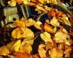 #hojas #ocres #invierno #coche #luna #volante #hojarasca #asiento #piloto #auto – Instagram
