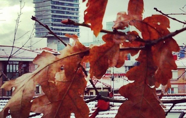 Haritzak #BEC bezain irmo! #elurra #negua #teilatuak #tejados #haritza #roble #zuhaitza #árbol #hojas #nieve #hostoak #ramas #invierno #edificio #eraikuntza #arquitectura #arkitektura #Barakaldonevado #Barakaldoelurtuta #Barakaldo  #elurramaramara – Instagram