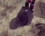 Las edades de los #árboles nos descubrirán el #camino #huella #edad #anillos #sombra #pasos #rojo – Instagram