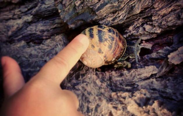 Caricias que traspasan caparazones #caracol #caricia #caparazón #mano #niño #corteza #árbol #cuernos – Instagram