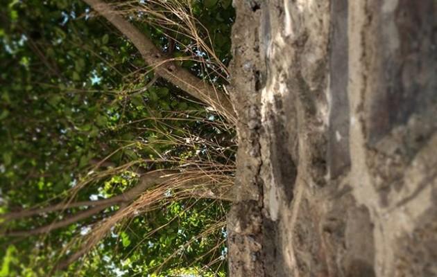 #Simetrías en el camino#orgánico vs. #inerte #árbol vs. #piedra #natura vs. #gizakia#zuhaitza #tree #pared #horma #wall @igerseuskadi – Instagram