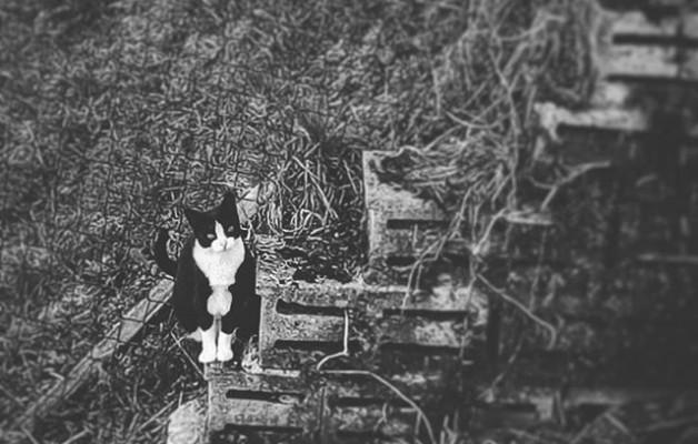 #zuribeltza #blancoynegro #blacknwhite #katua #gato #cat – Instagram