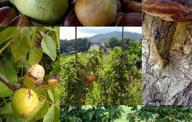 Tu #supermercado de confianza: #naturaleza #puravida!!!#peras #perucos #higos #castañas #nueces #manzanas #tomates … – Instagram