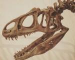 Más sólo somos una ínfima parte en millones de años…#esqueleto #dinosaurio #dino #cabeza #cráneo #tiempo #millonesdeaños – Instagram