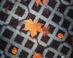 #Texturas de #otoño#hojas #hostoak #udazkena #Barakaldo #Sanbizente @igerseuskadi @igersbilbao @instagram – Instagram