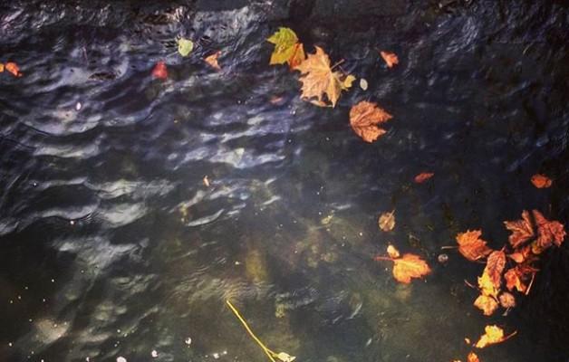 #Mar de flores#Flores de mar#rosa #ría #Nervión #Nerbioi #itsasadarra #agua #hojas #otoño #piedras #Barakaldo@igerseuskadi @igersbilbao @instagram – Instagram