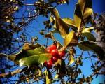 #Negua bertan da #Saldropo #Zeanuri #Dima #Ubidea #Gorbeialdea #Bizkaiamaite@igerseuskadi @instagram @basurdeeditions #basoa #bosque #zuhaitza #arbol #ramas #fruto #invierno #winteriscoming – Instagram
