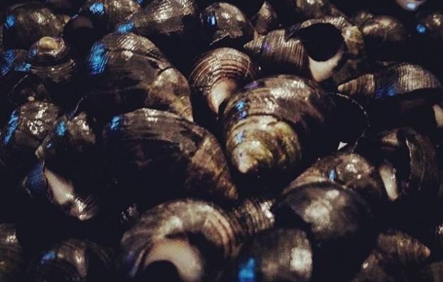 #caracolillos #magurios #delmaralamesa #celebraciones #navidad #gabonak #ospakizunak #itsasokojakiak #ricorico #goxogoxoa @igerseuskadi @instagram – Instagram