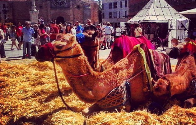 #FeriaMedieval #Ávila #camellos – Instagram