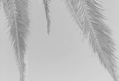 #textures #texturas #palmeras @igers @instagrames #cielo #zerua #palmondo #blackandwhite #blancoynegro #zuribeltza #escaladegrises – Instagram